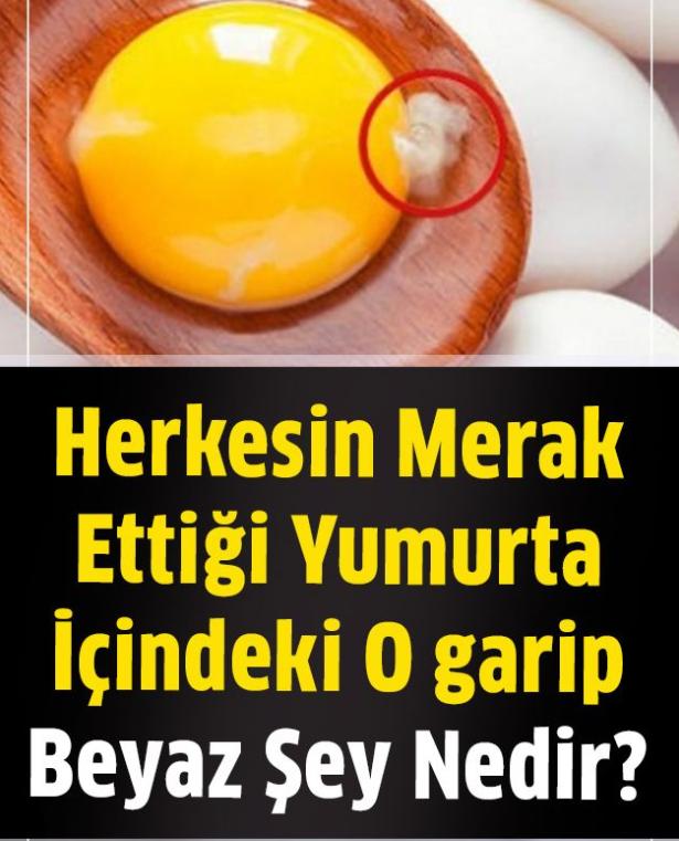 Herkesin Merak Ettiği Yumurta İçindeki O Garip Beyaz Şey Aslında